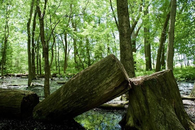 Jaka jest różnica między drzewem a drewnem